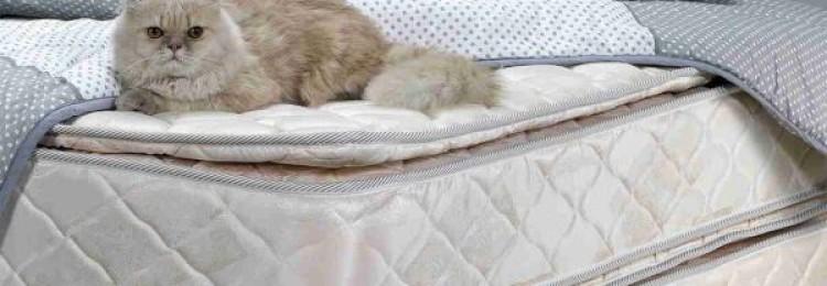 13 эффективных способов убрать запах кошачьей мочи с матраса в домашних условиях