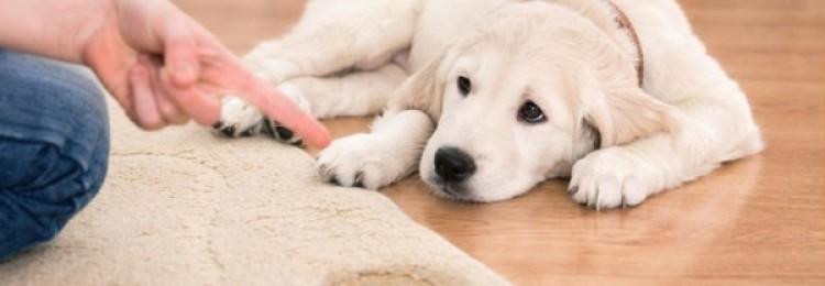 17 проверенных способов убрать запах собачьей мочи с ковра в домашних условиях