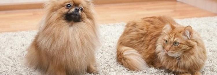 15 надежных способов, как очистить ковер от кошачьей и собачьей шерсти