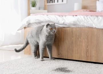15 надежных способов, как избавиться от запаха кошачьей мочи на ковре