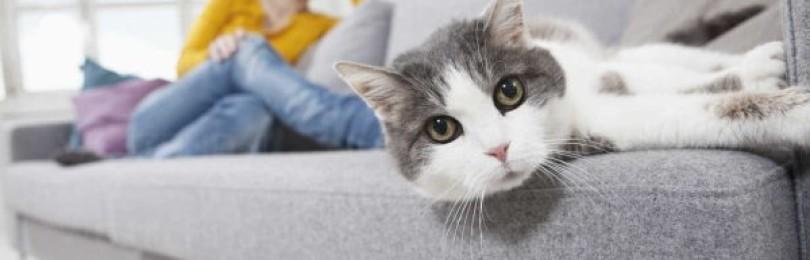 13 эффективных способов, как убрать запах кошачьей мочи с дивана в домашних условиях