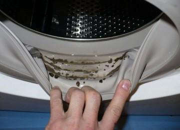 6 народных рецептов, как избавиться от плесени в стиральной машине своими руками