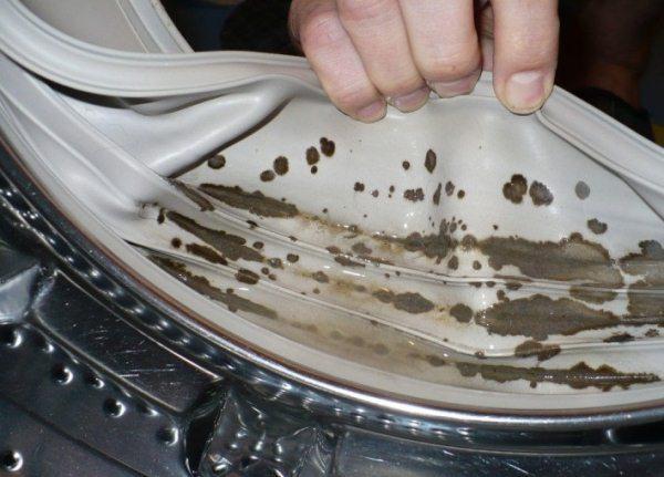 грибок на резинке стиральной машины